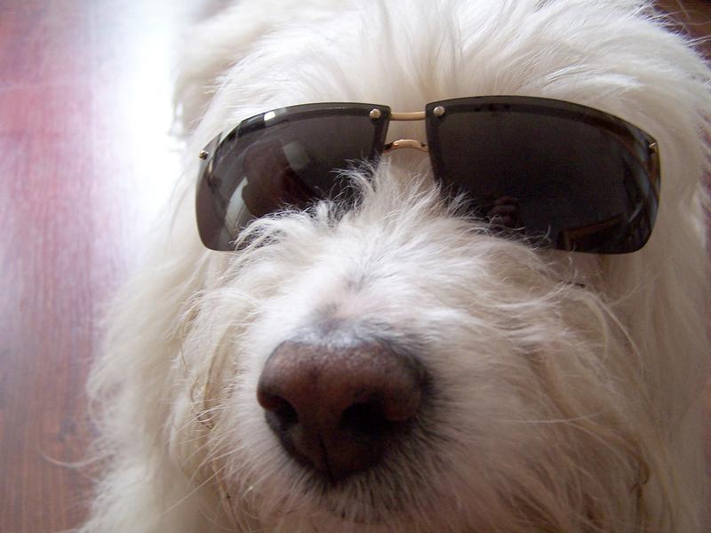 http://everydaygiving.typepad.com/photos/uncategorized/2007/08/01/dog_with_sunglasses_2.jpg